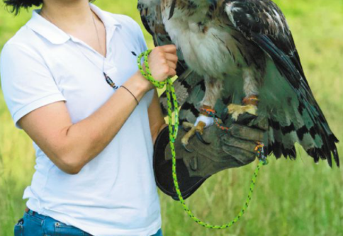 águila.png