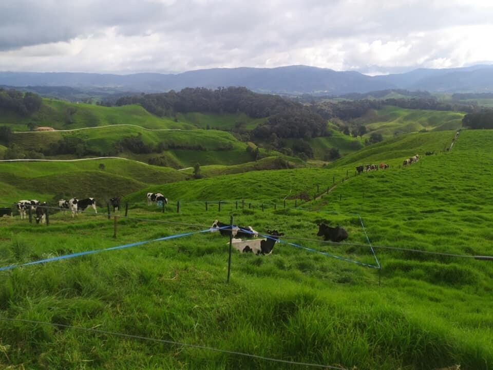 Lecheros de Antioquia