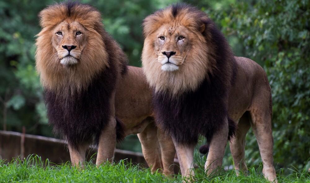 Zoológico de Washington