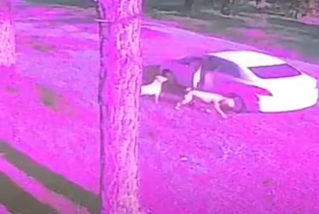 hombre-abandono-dos-perros.jpg