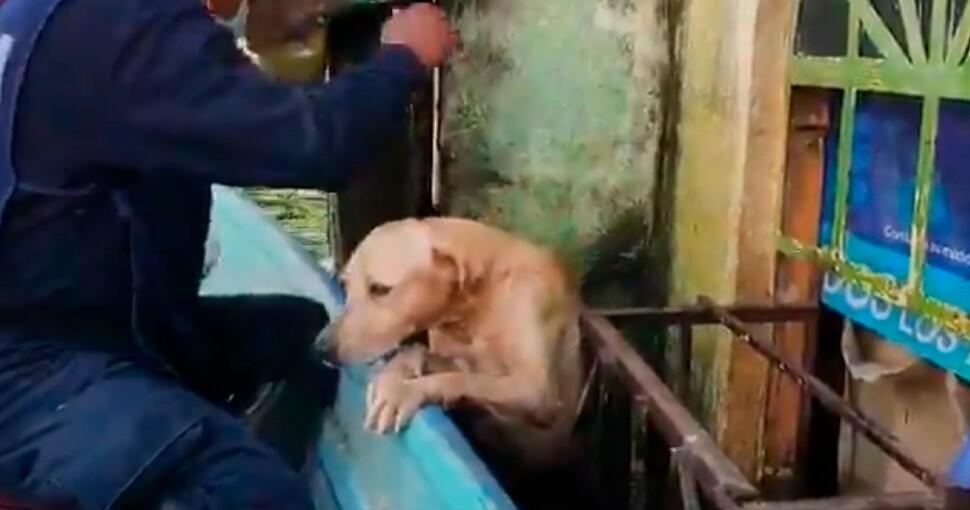 perro atrapado en inundación_marina.jpg