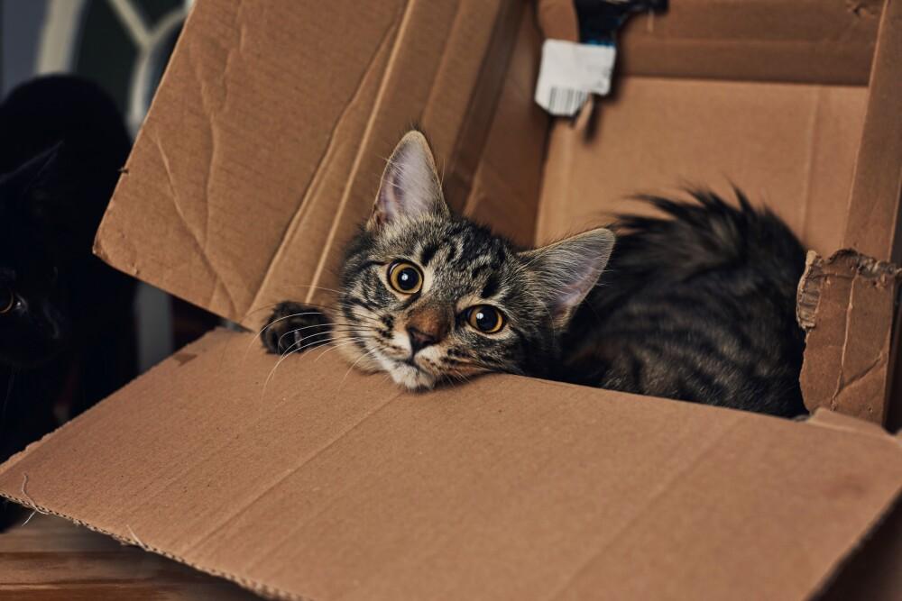 Kitten playing in a cardboard box