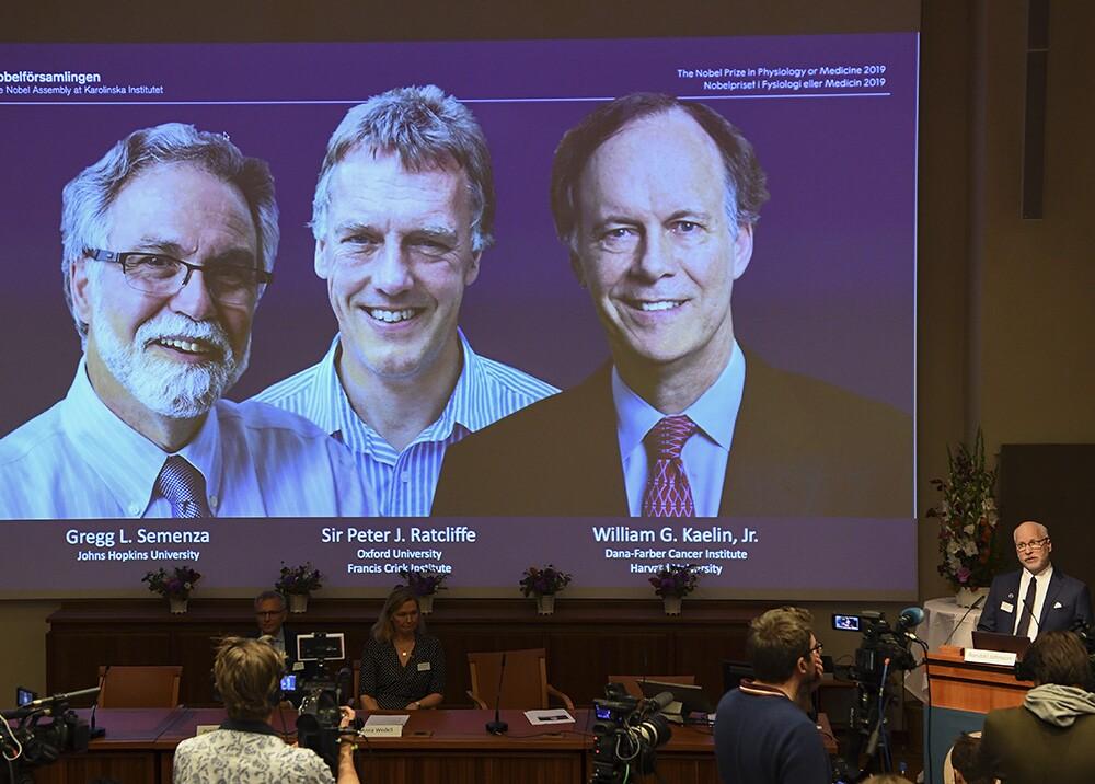 345210_Premio Nobel de Medicina 2019 a estadounidenses Kaelin y Semenza, junto al británico Ratcliffe // Foto: AFP