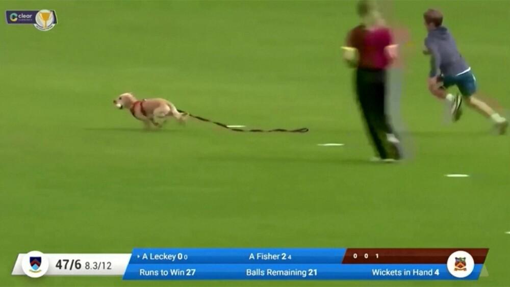 perro cricket