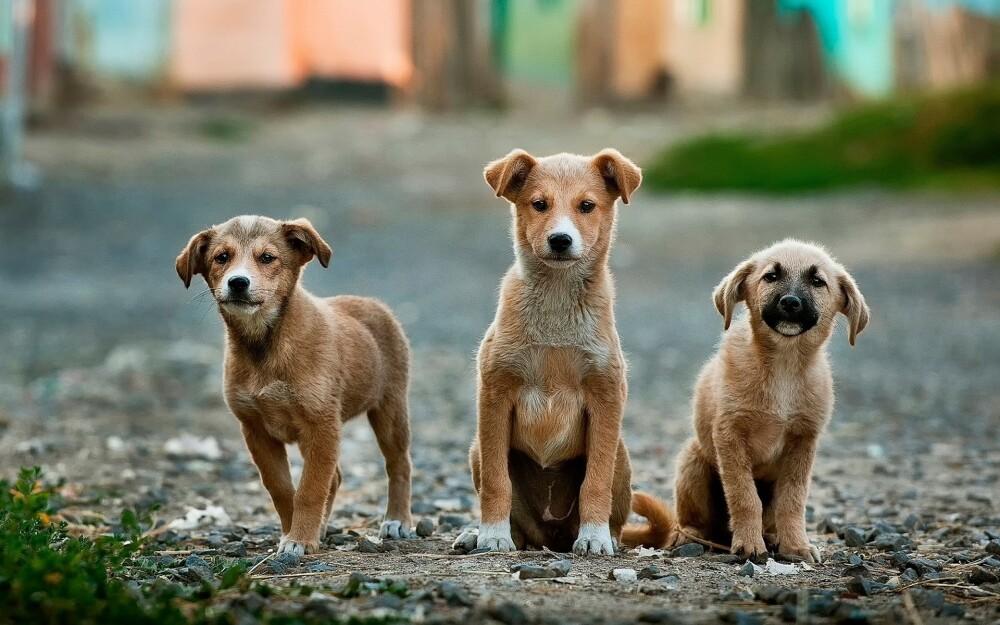 Derrumbe enterró a animales de Milagros Caninos, un refugio que cuida perros callejeros