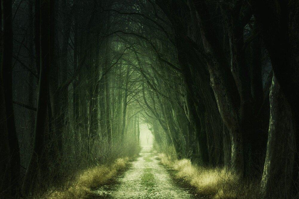 Bosques embrujados en el mundo.jpg