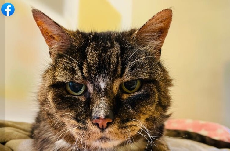 Gato apareció tras 20 años perdido pero murió dos días después