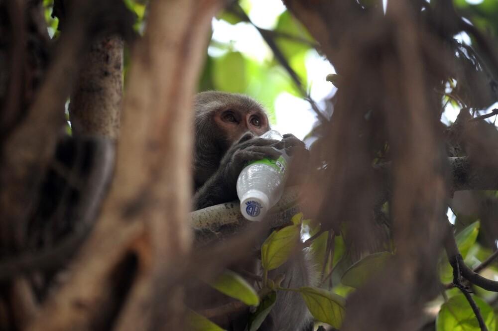 mono alcohólico