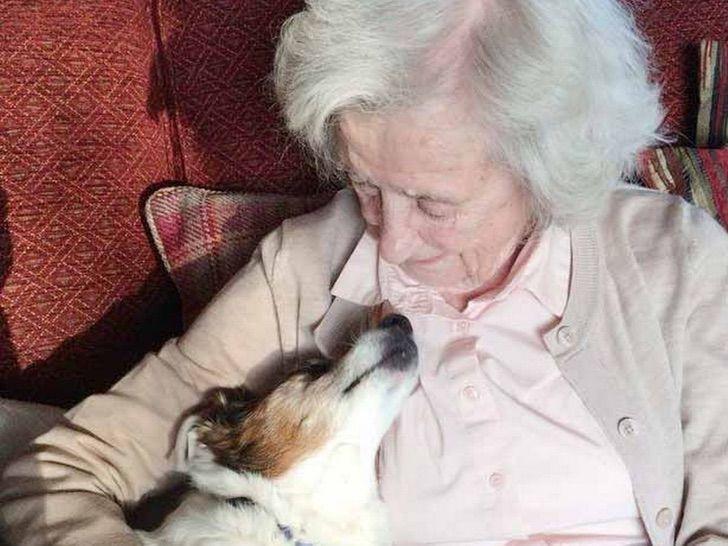 Conmovedora historia de adopción canina se vuelve viral en redes sociales.
