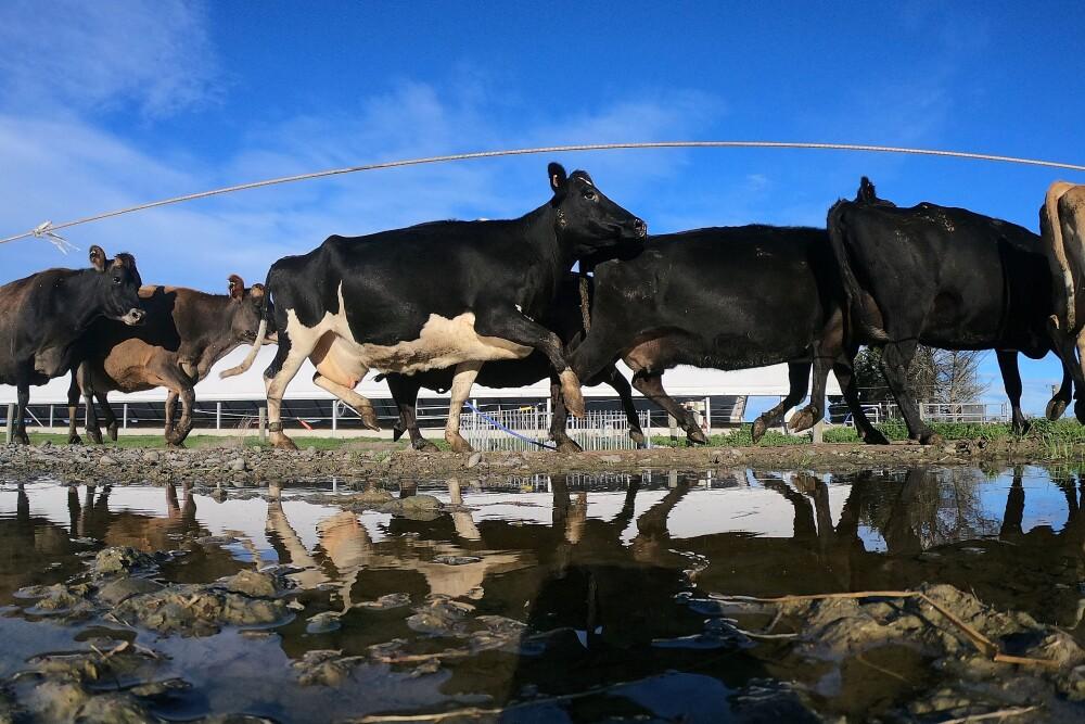 Nueva Zelanda, maltrato animal