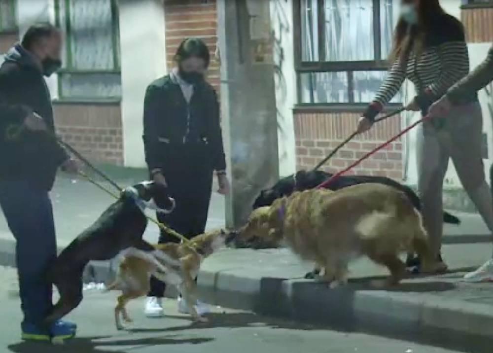 Vecinos y mascotas en Usaquén, preocupados por brutal acto de violencia
