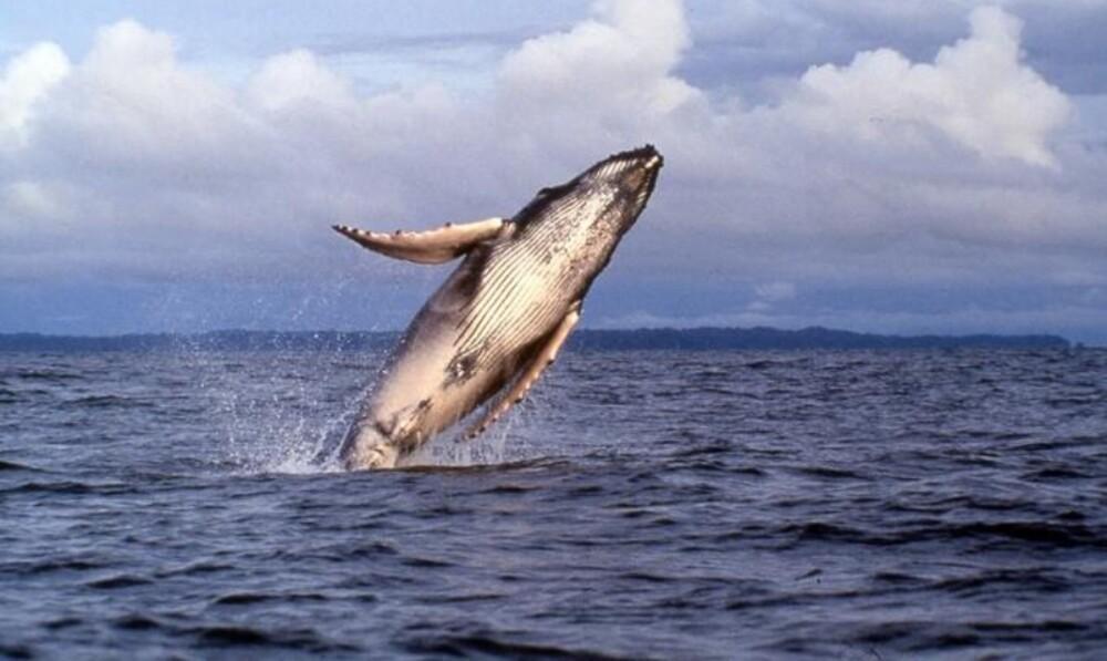 Avistamiento de ballenas en Bahía Solano.jpg