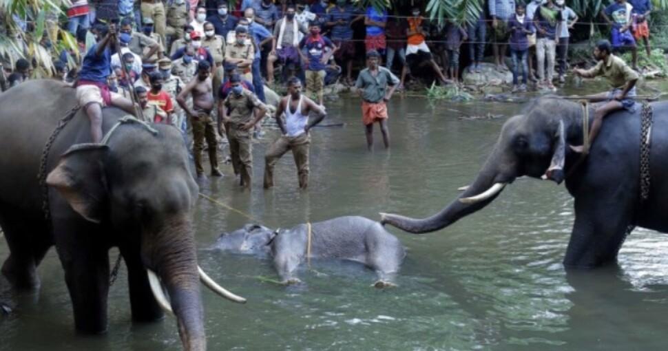 392554_elefante.jpg