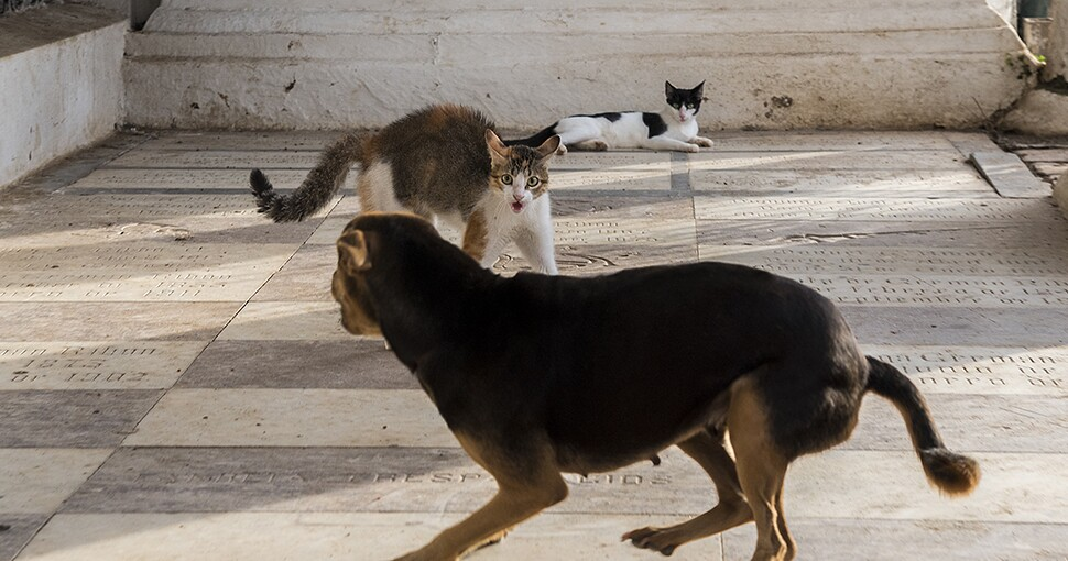 242265_catdog1.jpg