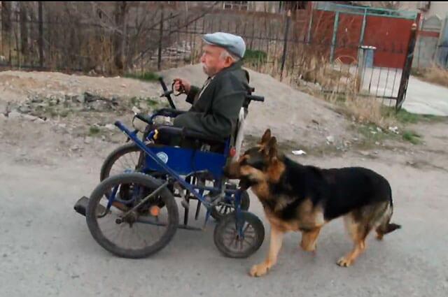 anciano-perro-silla-de-ruedas-lo-mas-trinado.jpg
