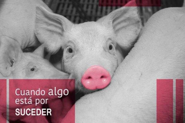 porkcolombia.jpg