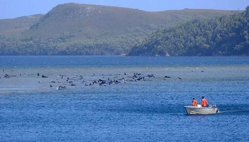 ballenas australia