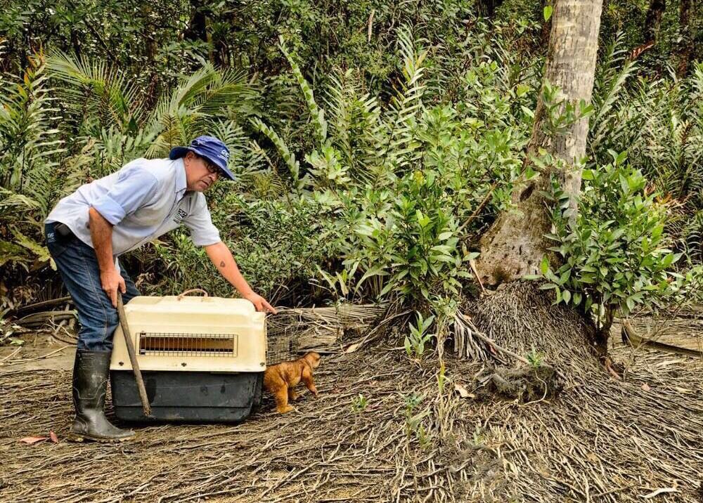 297338_Blu Radio / Más de 100 animales decomisados en el Valle fueron liberados en la Costa Atlántica / Foto: Cortesía.