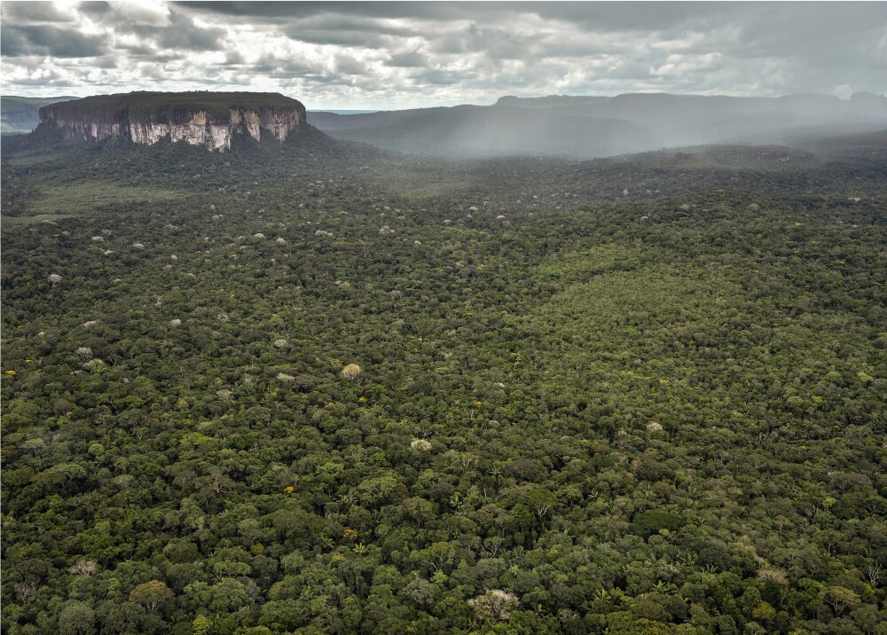 375125_Amazonas // Foto: AFP