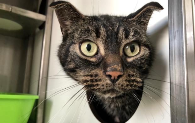 Gato se quedó encerrado más de 50 días sin agua ni comida y logró sobrevivir