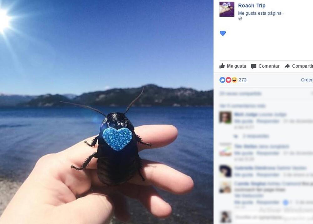 4100_La Kalle - Mascota cucaracha - Foto: Facebook