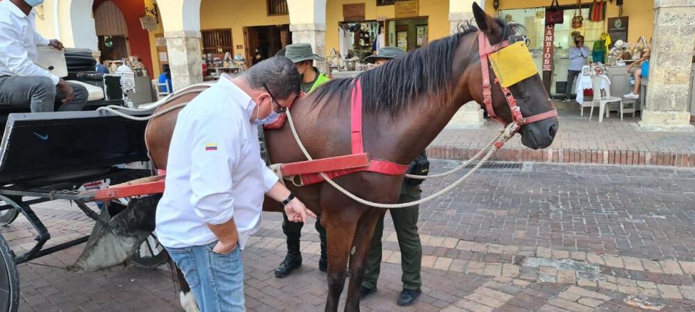 caballos en cartagena Foto fiscalia.jpeg