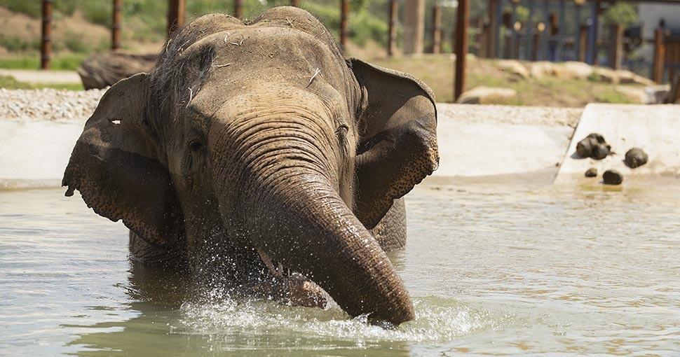 383393_elefantes_1.jpg