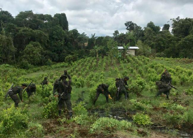 323078_BLU Radio, cultivos de coca / foto: Blu Radio