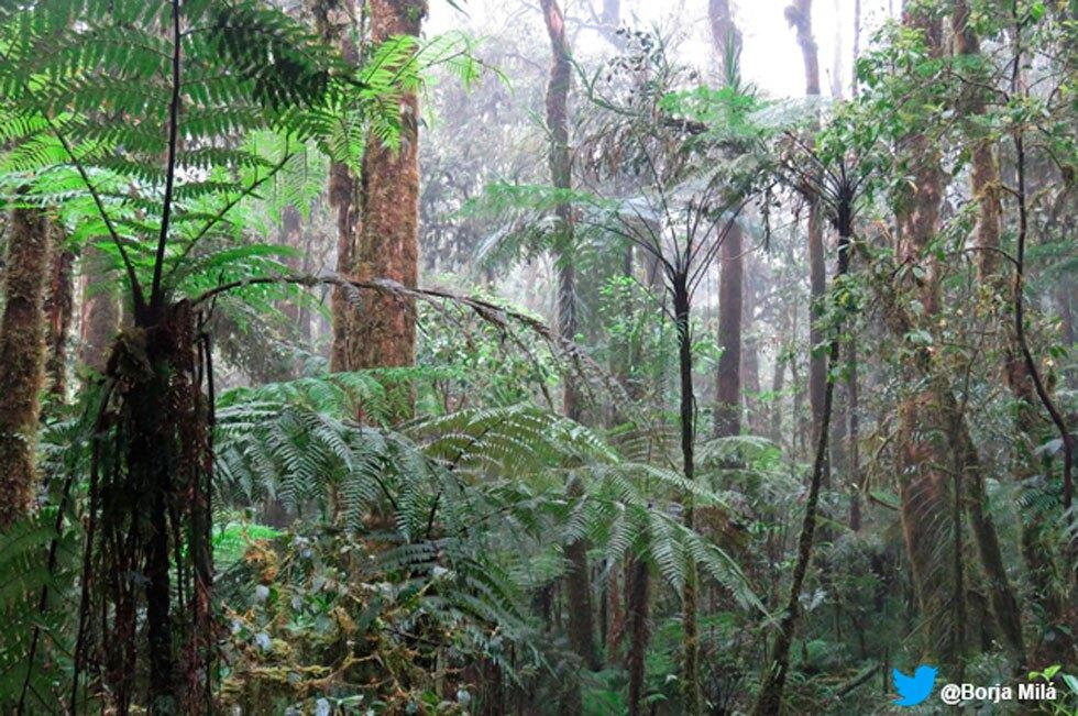 Bosque Papúa Nueva Guinea