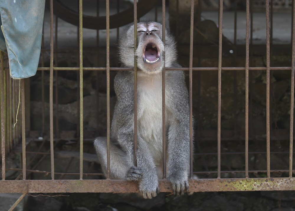 Mono, referencia / Foto: AFP.