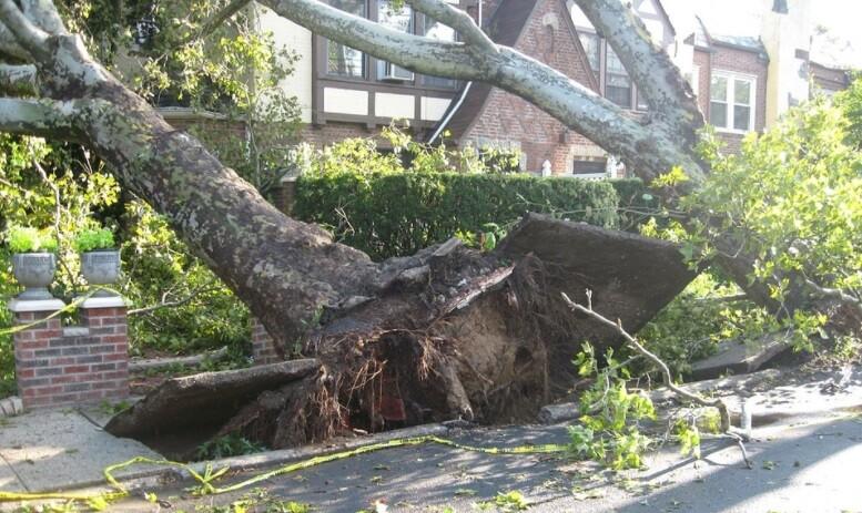 Hombre murió aplastado por un árbol