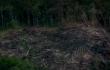 incendios amazonia.png