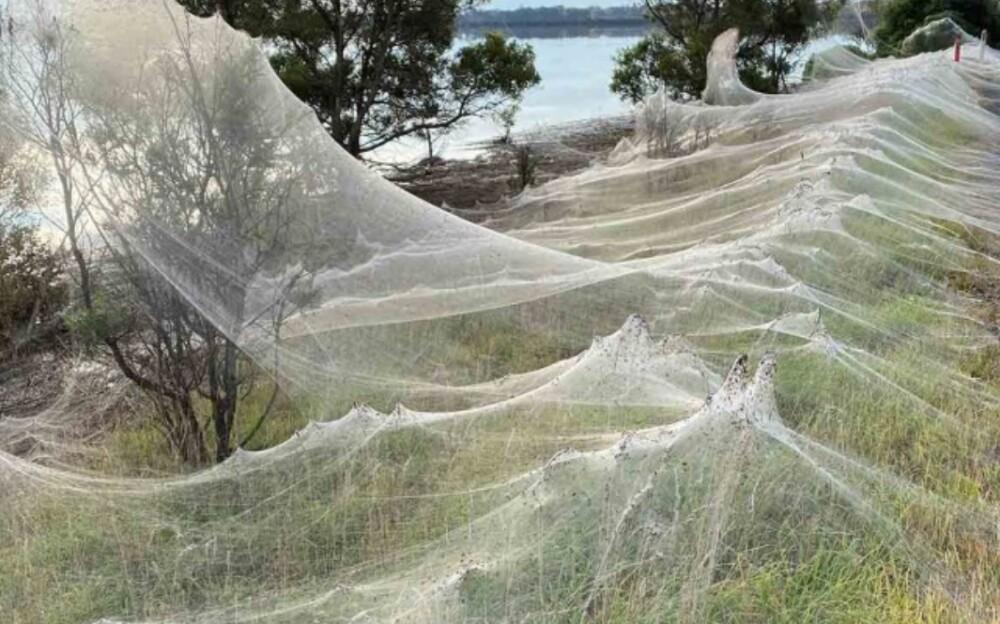 Telarañas en Australia.