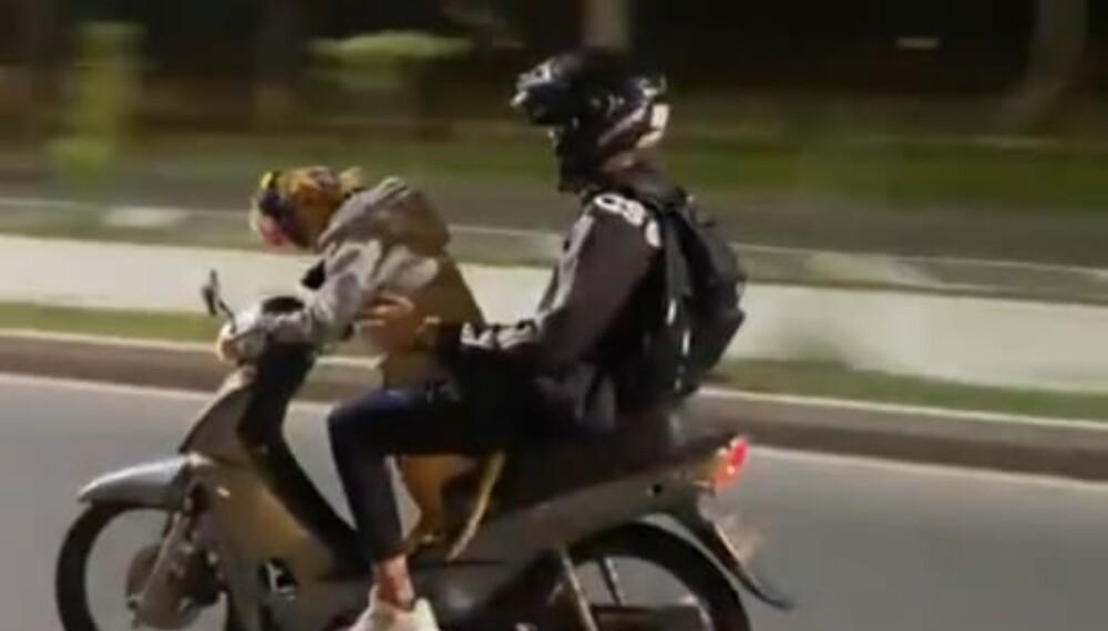 Perro-manejando-moto.jpg