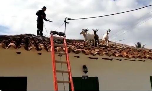 cabras en el techo de una casa en Santander
