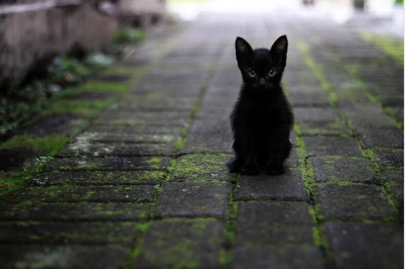 Gato abandonado.jpg