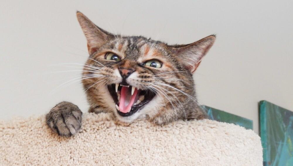 Mujer cremó a su gato y luego lo vio entrar a la casa