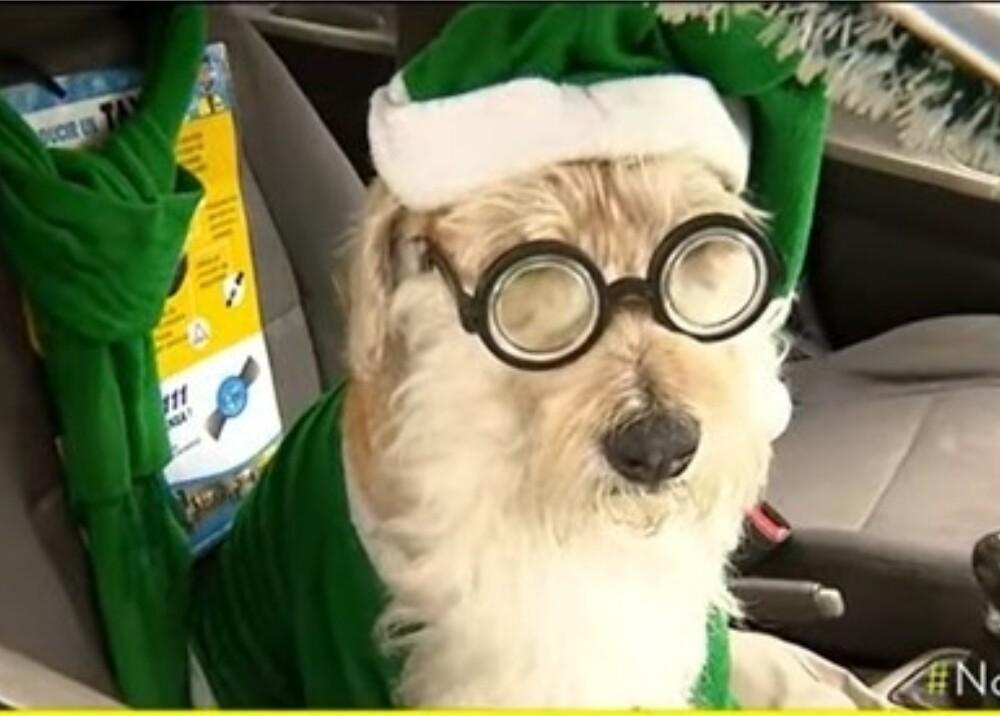 Perro vestido papa noel foto captura video noticias caracol.jpg