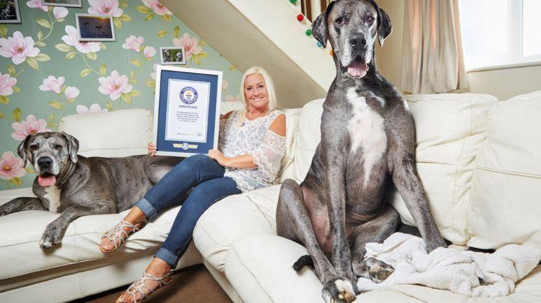 murio perro más alto del mundo.JPG