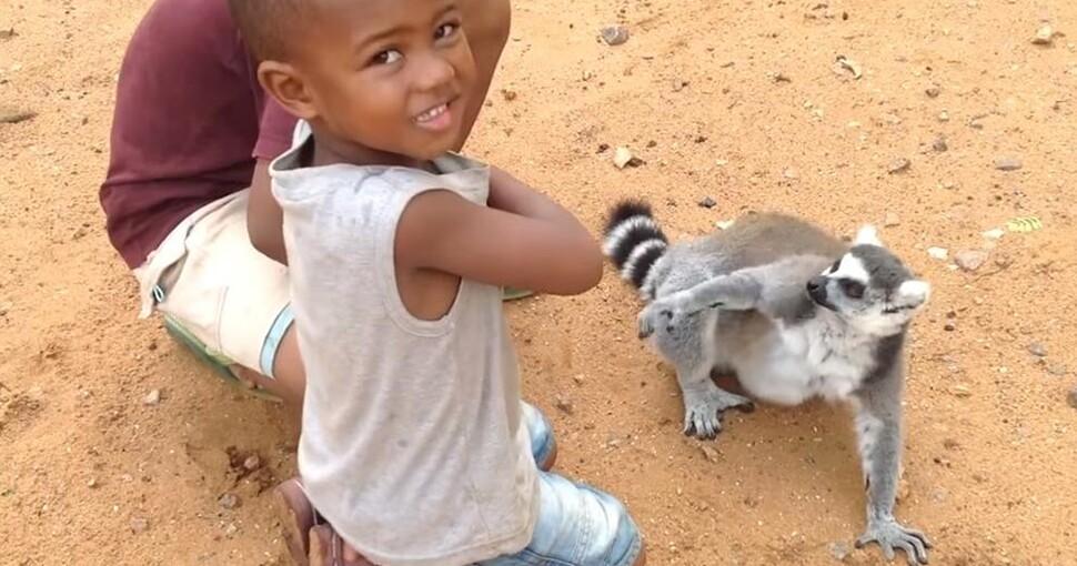 360613_lemur970.jpg