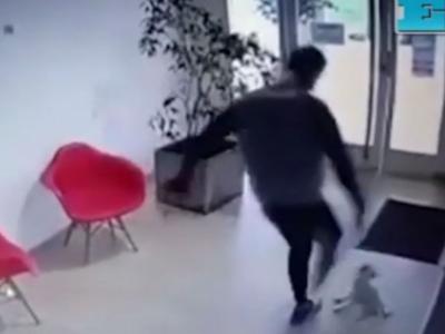 Hombre pateó a una perrita