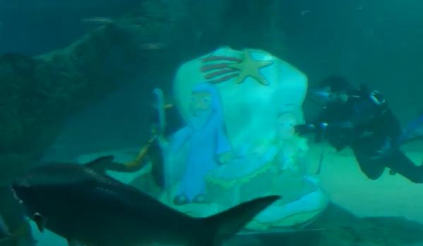 buceadores instalan un pesebre navideño entre un tanque lleno de tiburones.PNG