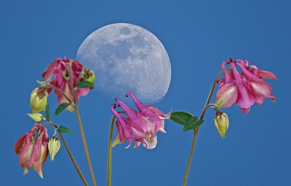 luna y flores.jpg