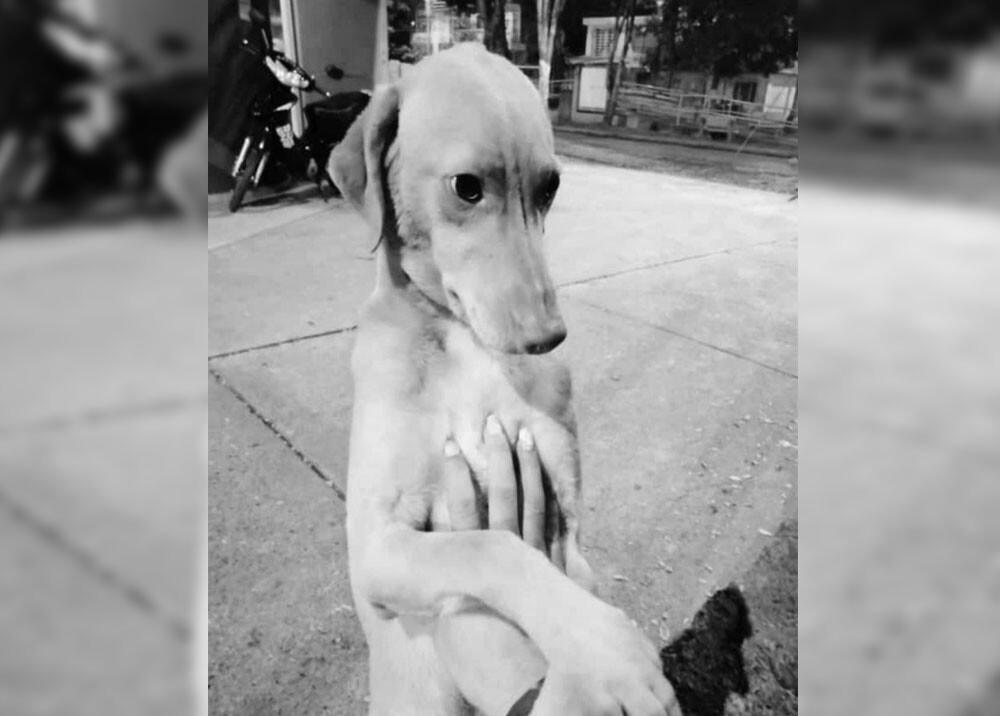 monito perro asesinado con granada en tulua.jpg