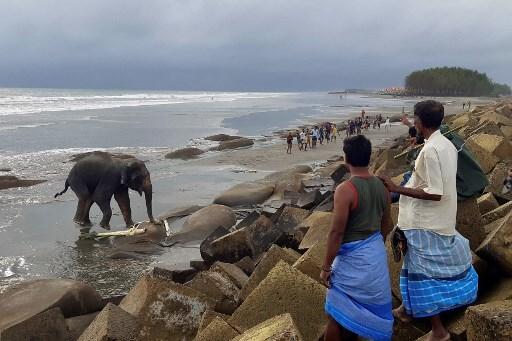 elefantes atrapados en playa de Bangladesh