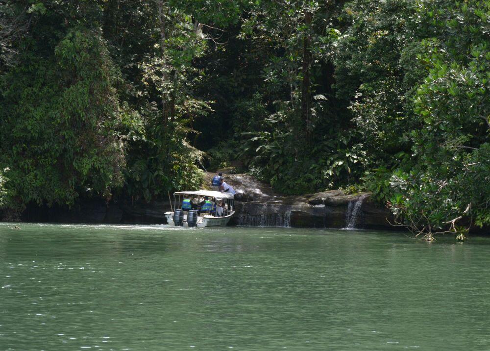 313822_El verde es el color que más predomina en las visitas al Pacífico. Foto: Mario Baos / BLU Radio