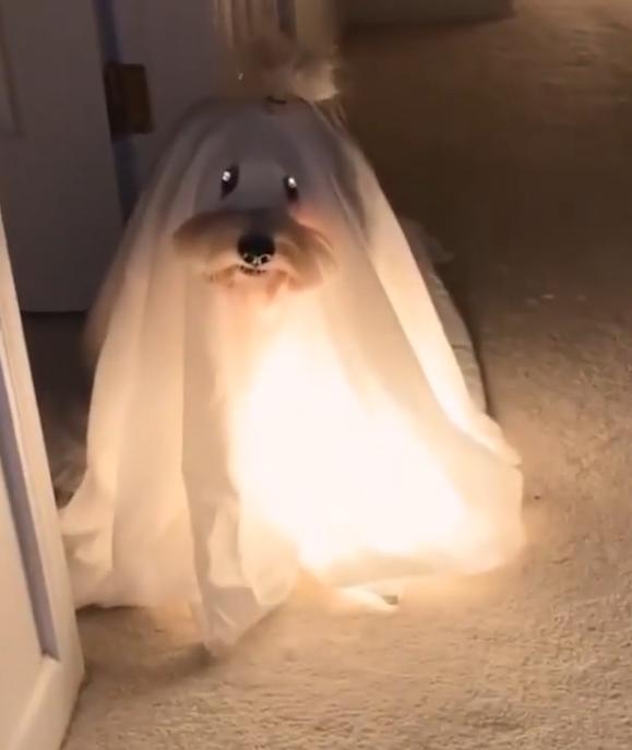 perro_fantasma.png