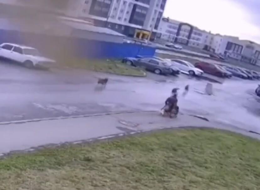 Hombre defendiendo a su mascota