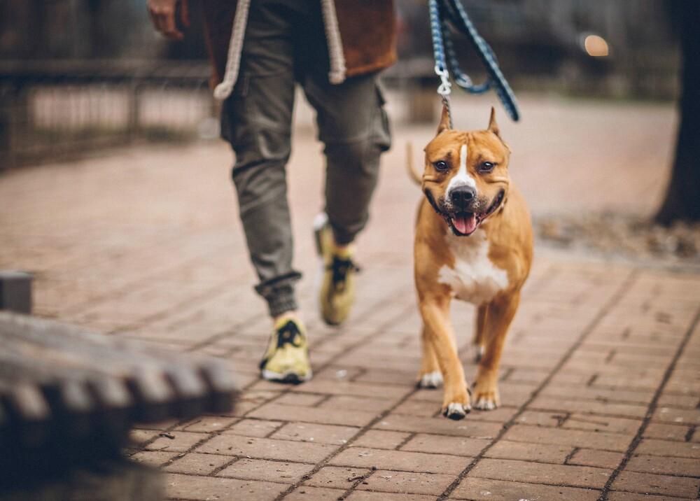 13999_La Kalle - En Iran es un problema pasear los perros - Foto Getty