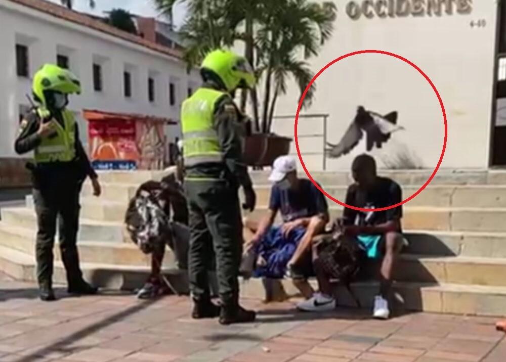 sorprenden a jovenes robando palomas en cali.jpg